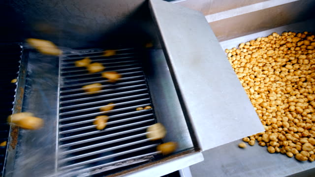 clean potatoes falling into a metal container from a conveyor at a factory. - завод по переработке пищевых продуктов стоковые видео и кадры b-roll