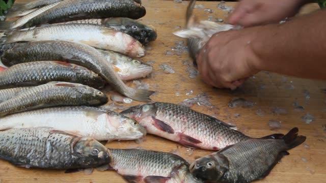 stockvideo's en b-roll-footage met reiniging en snijden van vis - carp