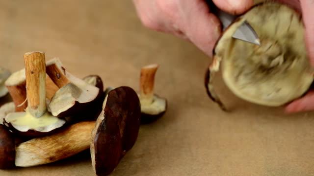 reinigung steinpilz und bay bolete pilz (steinpilz badius) - speisepilz pilz stock-videos und b-roll-filmmaterial