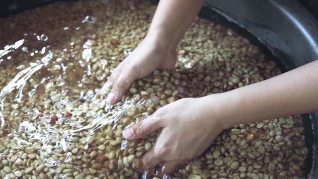 reinigung von kaffeebohnen von hand - koffeinmolekül stock-videos und b-roll-filmmaterial