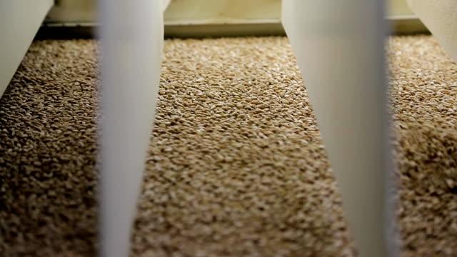 vidéos et rushes de nettoyage des grains des débris à un moulin à farine - inspecteur