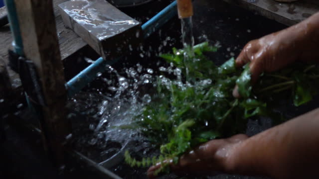 Cleaning sweet basil,Slow motion video