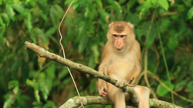 cleaning time. - makak maymunu stok videoları ve detay görüntü çekimi