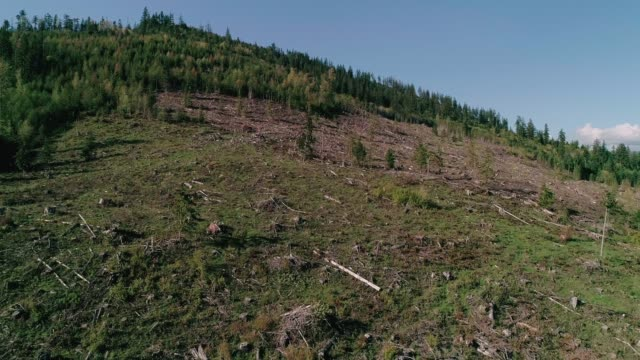 Clear Cutting Forest Drone Over Downed Trees