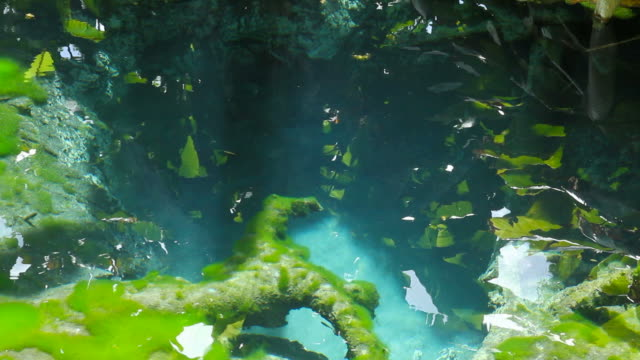 Clear water spring in forest video