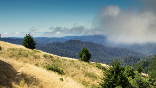 Clearing Fog in the Santa Cruz Mountains - Time Lapse
