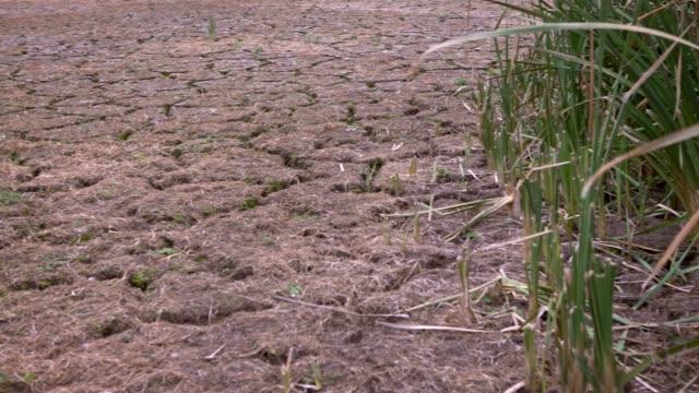 vídeos de stock, filmes e b-roll de 4k, mudança climática, terra com chão seco e rachado em espanha. seca do solo - erodido