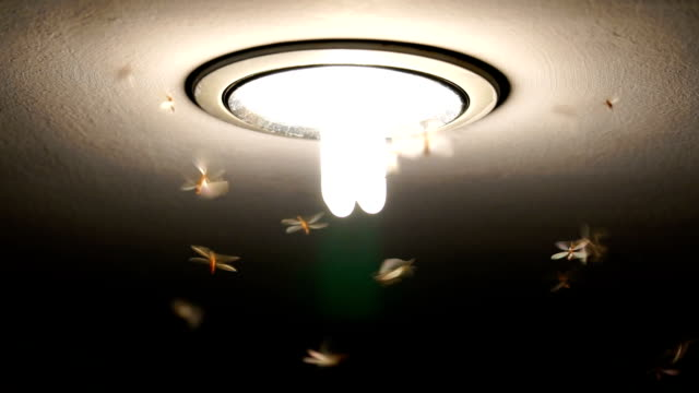 FHD clip of slow motion footage of Mayflies swarming and flying the light, bug life concept video