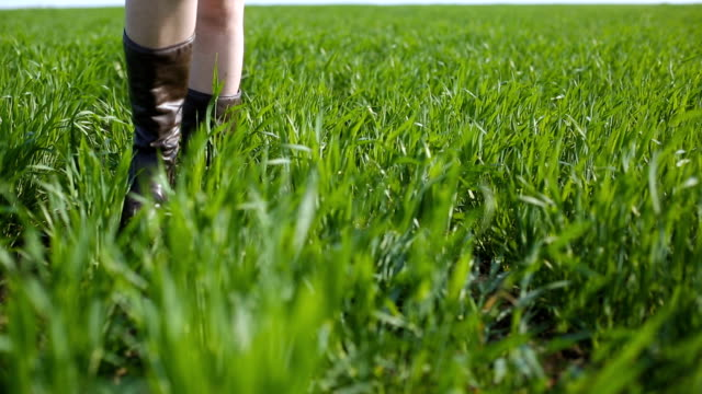 Close plan of legs of the young woman in cowboy boots walking in the field of green wheat.  Steadicam shot.  Beautiful plus-size model posing. Close plan of legs of the young woman in cowboy boots walking in the field of green wheat.  Steadicam shot.  Beautiful plus-size model posing. cowgirl stock videos & royalty-free footage