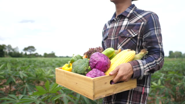 Close up Asian young farmer is holding a box of organic vegetables video