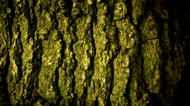 Close up bark detail Macro panning over tree bark detail plant bark stock videos & royalty-free footage