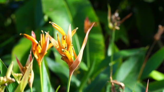 Close up bird of paradise flower with ant