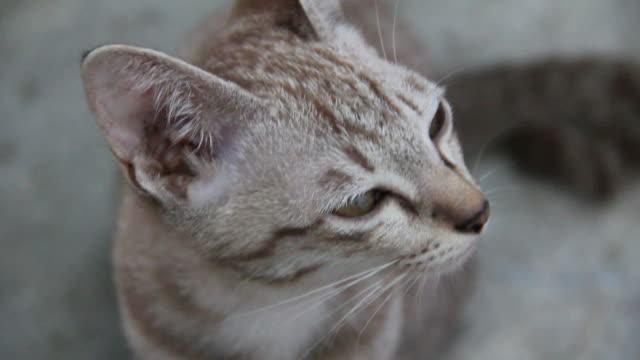 vídeos y material grabado en eventos de stock de primer plano de la cara de cat. - vibrisas