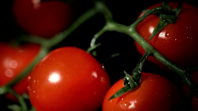 Close up cherry tomatos on stems High speed, close up of cherry tomatos on black background in studio low lighting stock videos & royalty-free footage