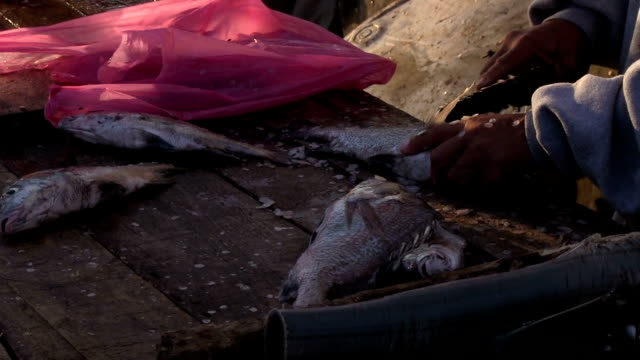 Close up cleaning fish during sunrise in Mazatlan Mexico video