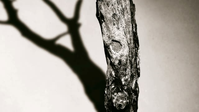 Close up Die tree with shadow move : 4k motion Parallax video