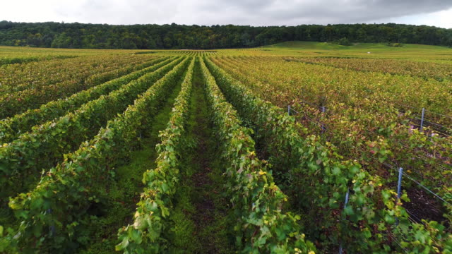 close up flying over vineyard in france - azienda vinivola video stock e b–roll