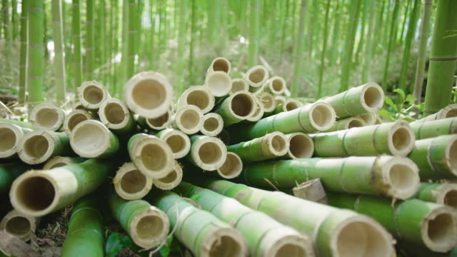 Close up footage of cut organic bamboo poles ready to be processed into sustainable green products. Bamboo forest in background. Flare.