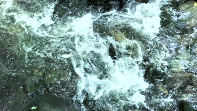 stäng upp skog ström kör över stenar - torv bildbanksvideor och videomaterial från bakom kulisserna