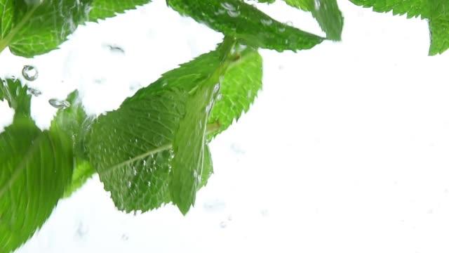 水に浮かんでいる新鮮な緑色のミント葉を閉じる - image点の映像素材/bロール