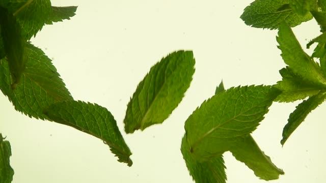 vídeos de stock e filmes b-roll de close up fresh green mint leaves in tea - fitoterapia