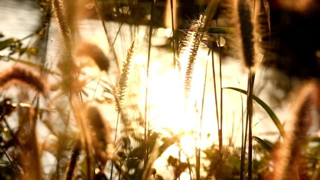 çimen çiçekler güneş ışığı ile kapatmak - çayır stok videoları ve detay görüntü çekimi