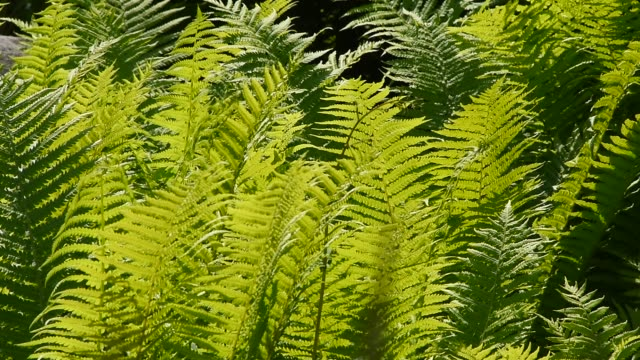 Close up green fern leaves in the wind video