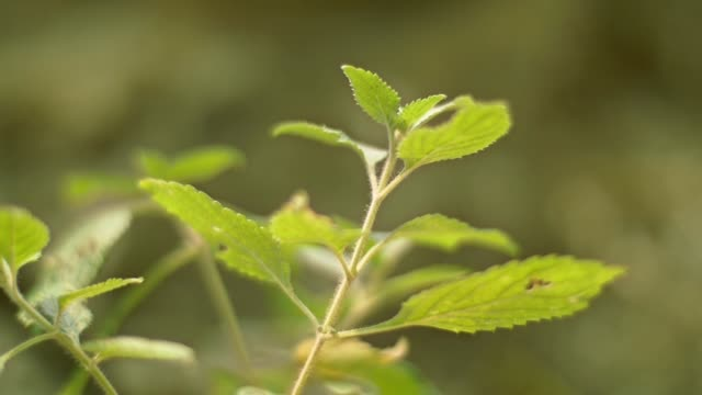 close up green plant growing in forrest video