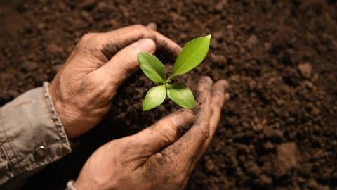 vidéos et rushes de gros plan des mains tenant et prendre soin d'une plante verte jeune - graine