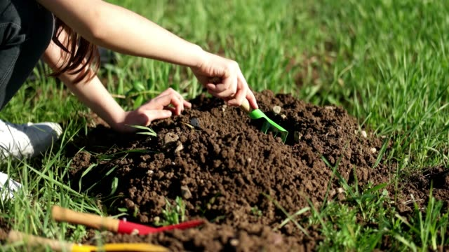 Close up Kid hand planting young tree Close up Kid hand planting young tree sowing stock videos & royalty-free footage