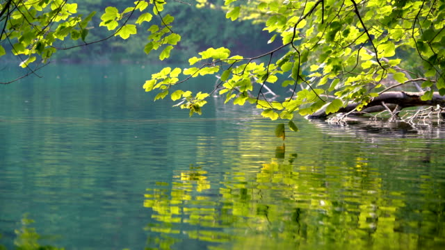 close up lake scenery of plitvice lakes, croatia. - spring stock videos & royalty-free footage