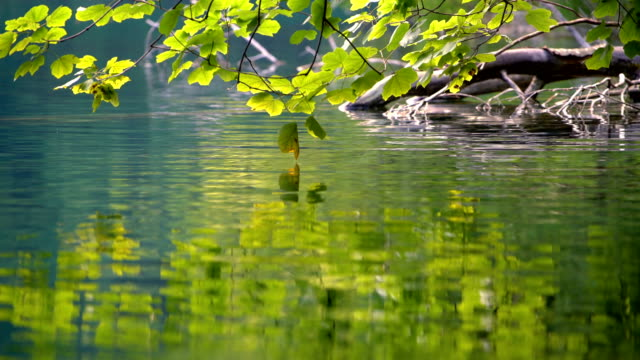 close up lake scenery of plitvice lakes, croatia. - ручей стоковые видео и кадры b-roll
