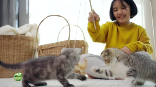 Close up lovely Asian child playing with kittens slow motion