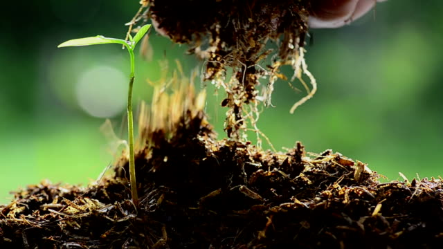 Close up Male hand giving farm manure to young tree video