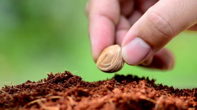 Close up male hand seeding tree video
