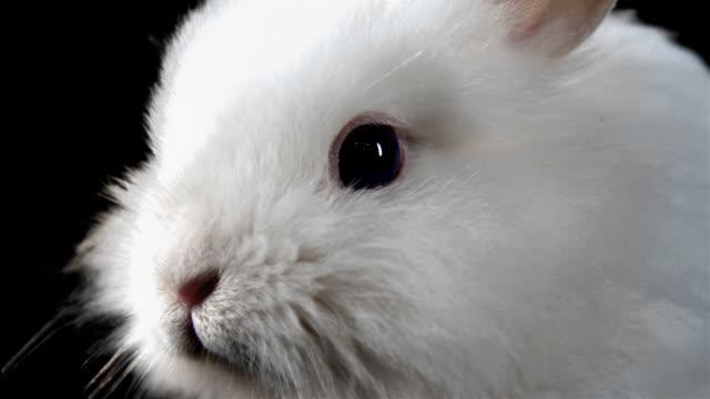 close up of a bunny. - tavşan hayvan stok videoları ve detay görüntü çekimi