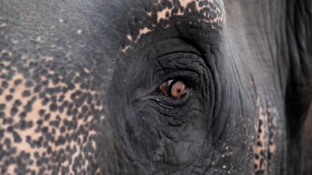 Close up of a elephants eye video