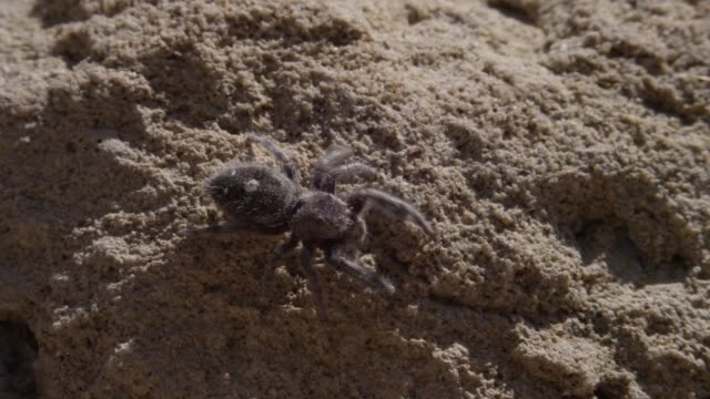 A close up of a jumping spider on a rock