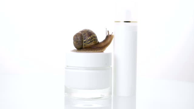 close up, of a snail, streaking towards a jar of skin cream. concept of: moisturizing cream, perfect skin, snail snack. - collagene video stock e b–roll