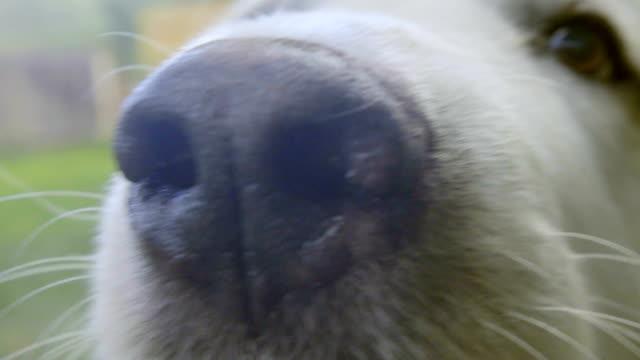 Close up of adorable dog Super close up shot of super cute dog looking at the camera panting stock videos & royalty-free footage