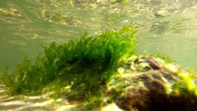 太陽の光の中で水の下で藻類をクローズアップ - 気候変動の概念 - environmentalism点の映像素材/bロール