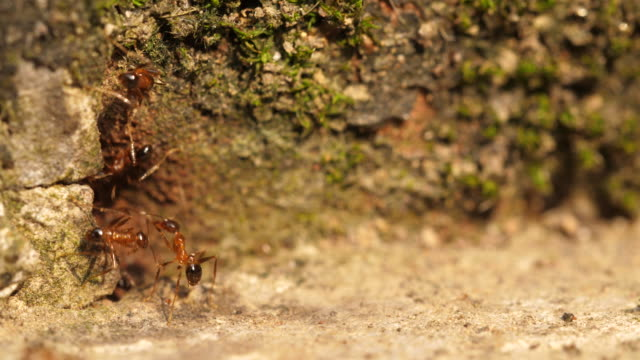 Close up of ants moving around their cave nest, 4k Close up of ants moving around their cave nest, 4k animal antenna stock videos & royalty-free footage