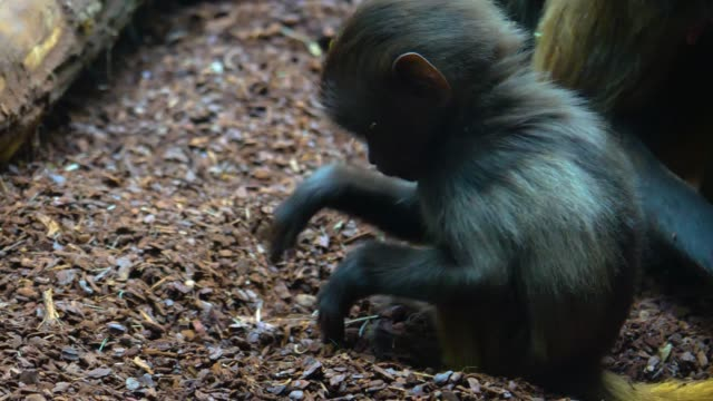 Close up of baby baboon