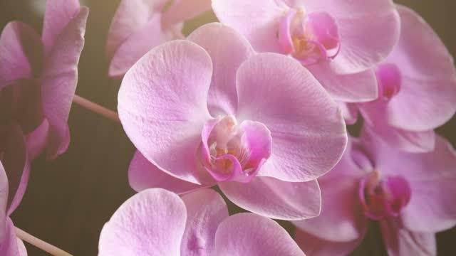 nahaufnahme der schönen orchidee auf schwarzem hintergrund. mit animation von sonnenlicht und schwebenden partikeln. zoomen sie in aufnahme. - orchidee stock-videos und b-roll-filmmaterial