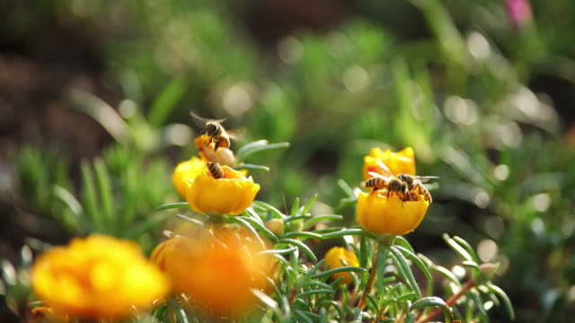 close up of bee and flower - pszczoła filmów i materiałów b-roll