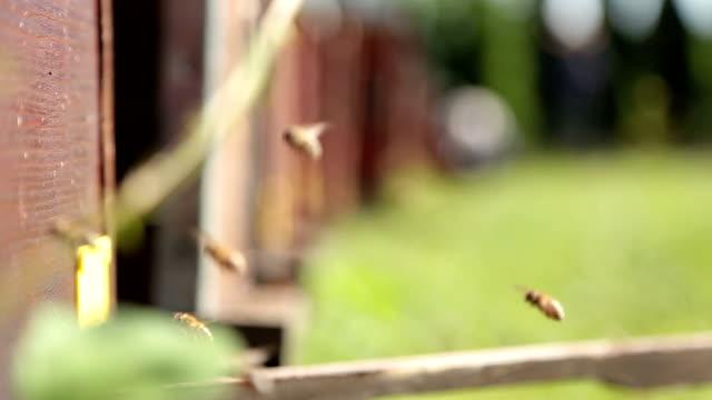 Nahaufnahme von Bienen in Bienenstöcken, herumfliegen – Video