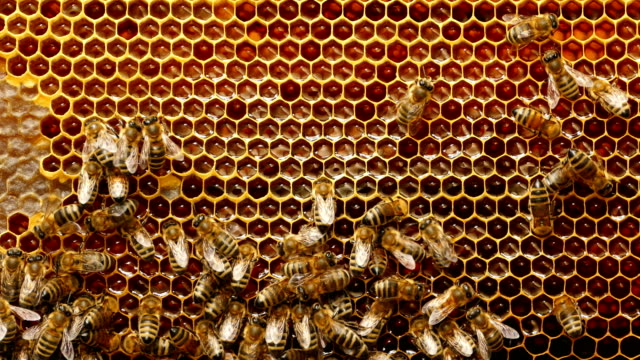 4K Close up of bees on honeycomb in apiary video