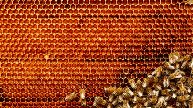 vídeos de stock e filmes b-roll de 4k close up of bees on honeycomb in apiary - honeycomb