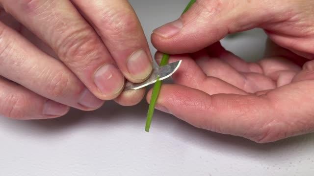 close up of caucasian hands cutting a cannabis marijuana clone - stelo video stock e b–roll