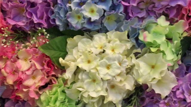 stockvideo's en b-roll-footage met close up van kleurrijke hortensia bush - hortensia
